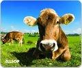 Obrázok pre výrobcu Allsop Položka pod myš - Krávy na louce